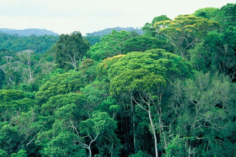Reserva Biológica de Una, Bahia   Reserva Biológica de Una, …   Flickr