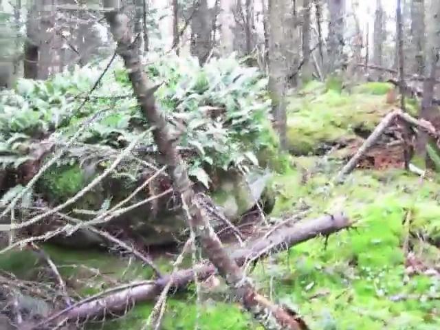 227_Catskills-Bushwhack_North-Dome_summit-plateau