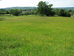 View from old meadow into Lamyatt