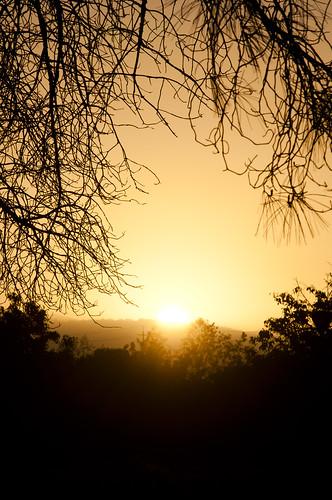 park sun sunrise nikon sanjose d90 heritagerosegarden nikond90