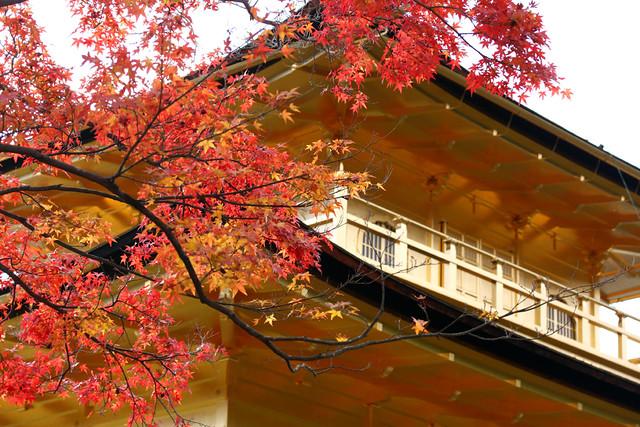 Shine on the Late autumn Kinkaku ❦2010