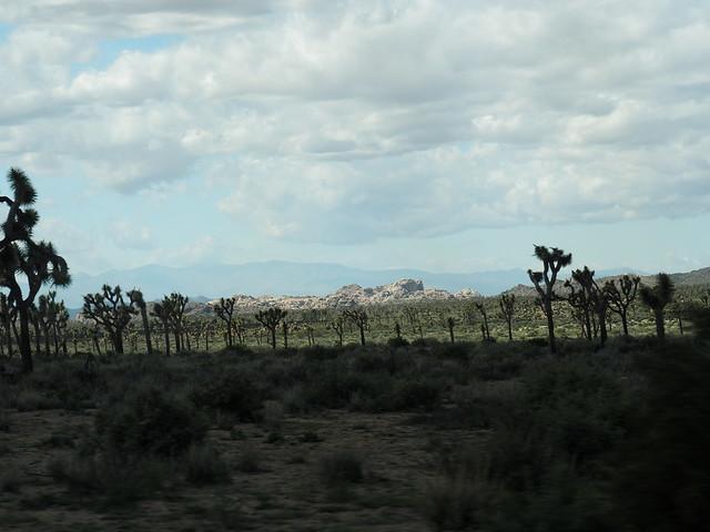Q3256681 Joshua Tree National Park