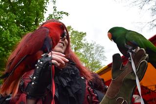 Elfian Queen of The Parrots