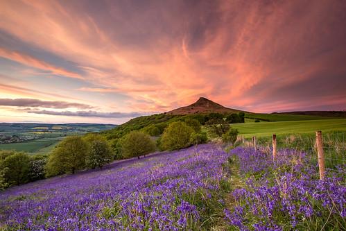 sunset bluebells landscape