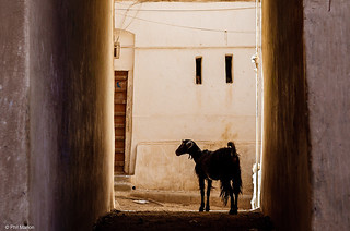 Silhouetted goat in the streets of Shibam, Yemen   by Phil Marion