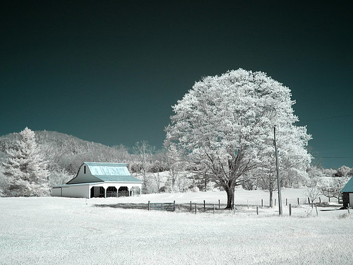 Photo Workshop -Infrared 06 | by KathyCat102
