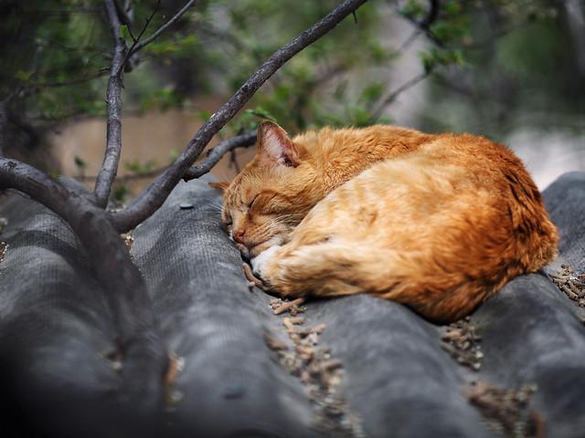 Street cat 193