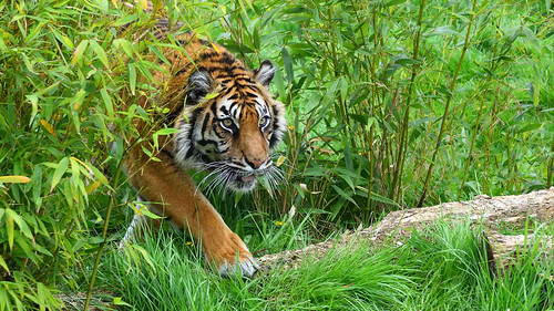 """""""I think the Wildlife Cafe is getting a bit overgrown""""   by tsbl2000"""