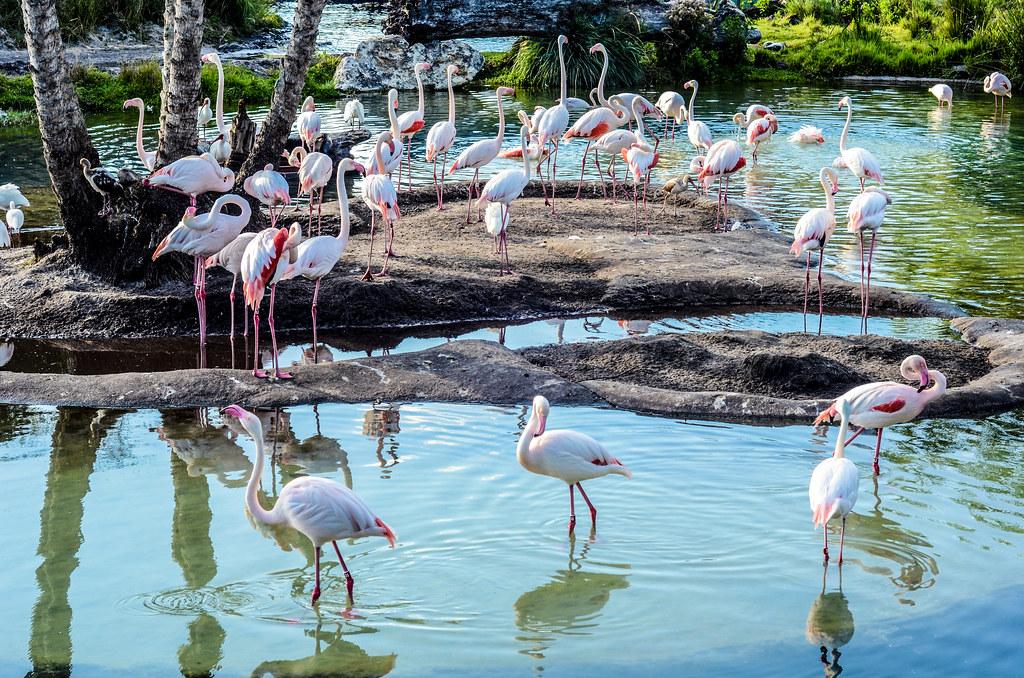 Flamingos safari AK