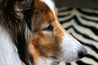 Contemplative Ben   by ~ Liberty Images
