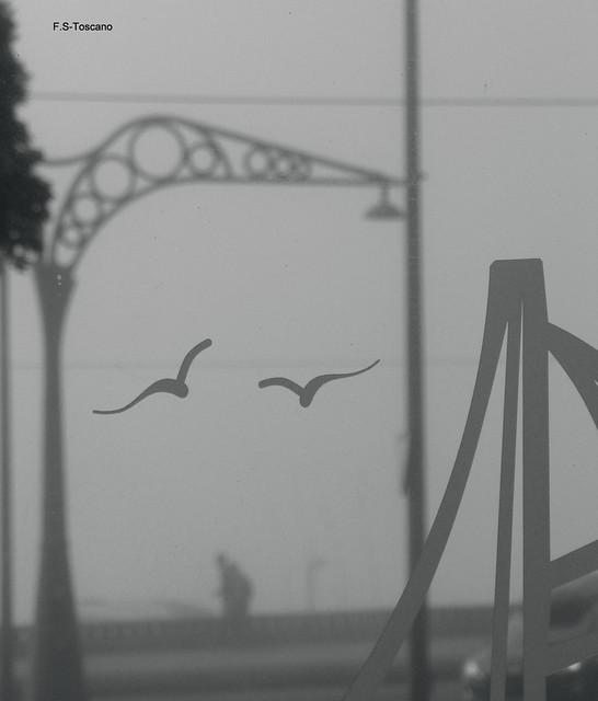 Niebla y opacidad. Fog and opacity.