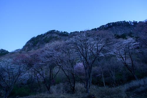 宇陀郡 奈良県 japan 屏風岩 桜 cherry 日の出 sunrise