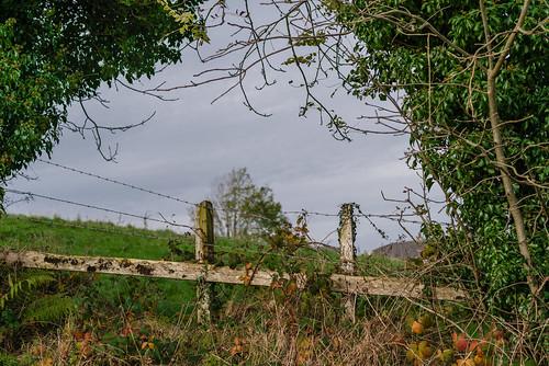 Country Fence | by Hattifnattar