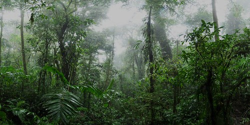 20111212_pano15_Santa_Elena_Cloud_Forest__sh0.7-70_sat10_hist_1000x500SS_sh0.5-50 | by Ozerochad