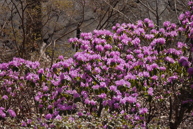 金, 2017-04-14 14:07 - New York Botanical Garden (Bronx)