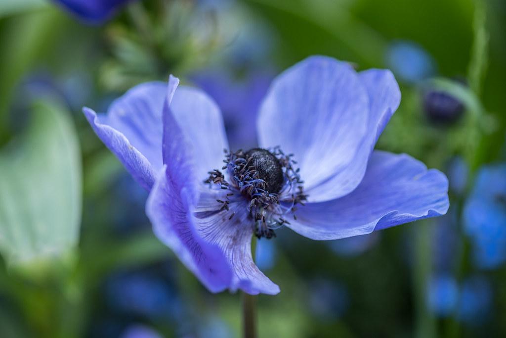 blue secret........