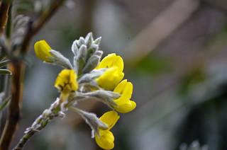 Flora n Fauna in EBC route   by Alok.Nanda