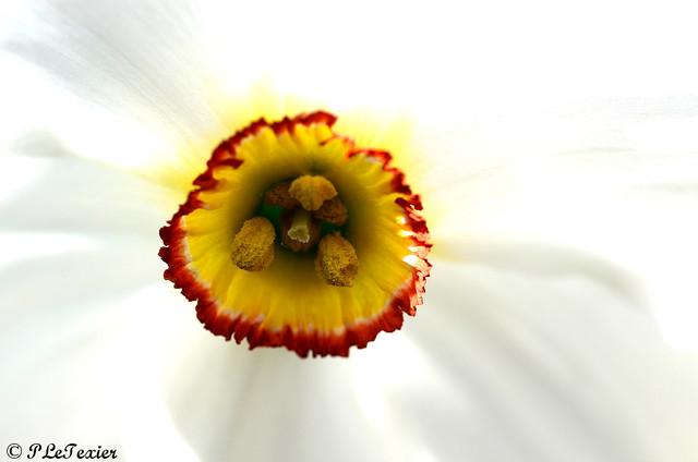 Les fleurs sont jolies, dès que le printemps revient 10