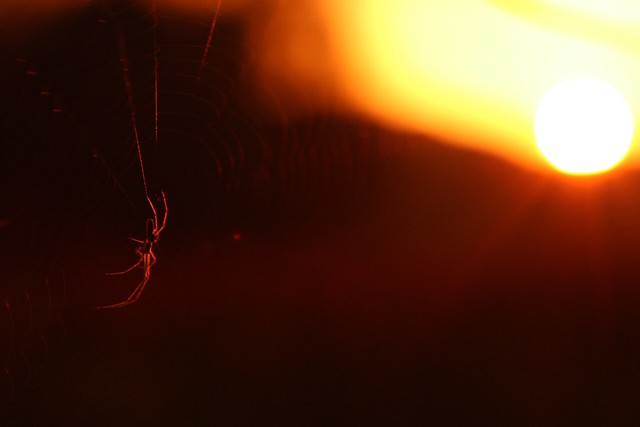 Bedtime spider