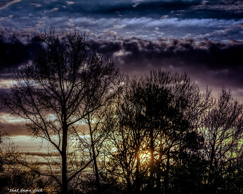 nature trees sunrise dawn clouds southcarolina nikon
