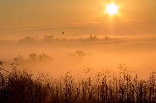 surrey mist trees sunrise fog