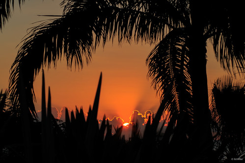stmartin stmaarten saintmartin caraïbes caribbean sun sunset palmtree palmier soleil coucherdesoleil sky ciel orange nuage clouds shadow ombre silhouette paysage edmillet lowlands terresbasses baieauxprunes