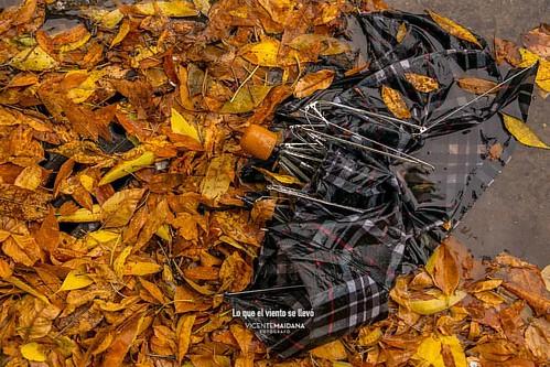 Lo que el viento se llevó. Vin @vmfotos  #paraguas #lluvia #hojas #otoño #viento #wind #vmfotos #tormenta | by Ratoon