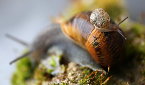 snail macro macromondays intothewoods canon pov pointofview dof depthoffield flickr