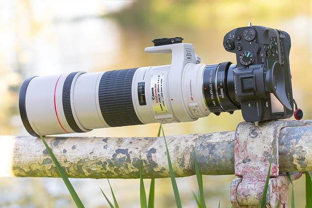 Canon EF300mm ƒ/4L IS USM & Kenko 1.4x Teleplus Pro 300 DGX & Metabones T Mark IV on SONY ⍺7II