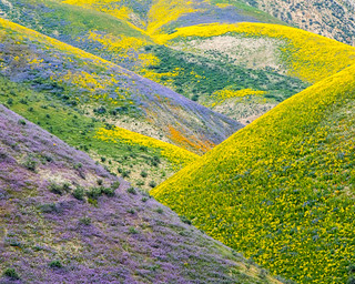 Patterns of the superbloom at Carrizo Plain National Monument | by mypubliclands