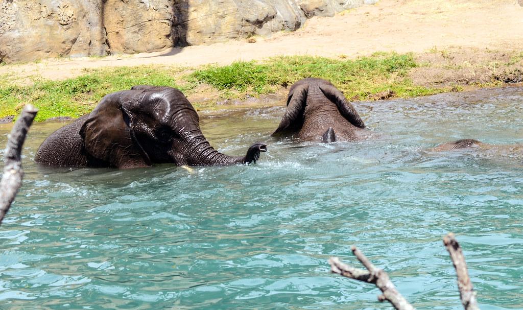 Elephant water safari AK