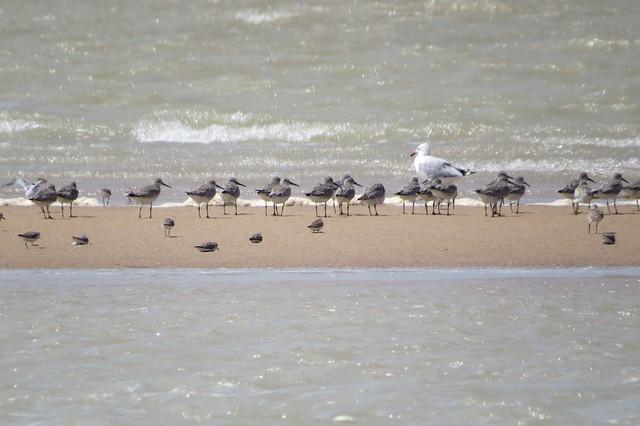 EAAF125 South-East Gulf of Carpentaria: Nijinda Durlga - Tarrant site