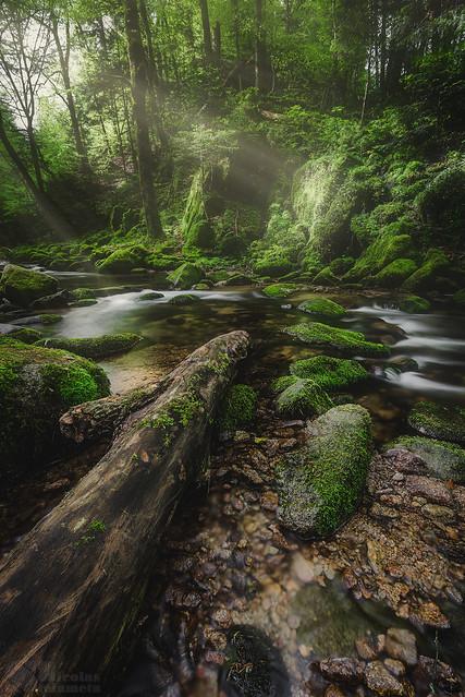 Geroldsau Forest