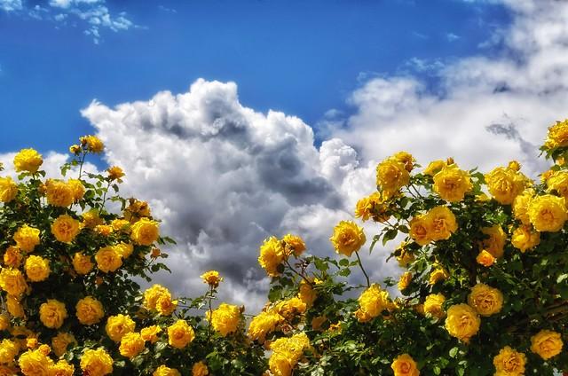 per tetto un cielo di rose.....