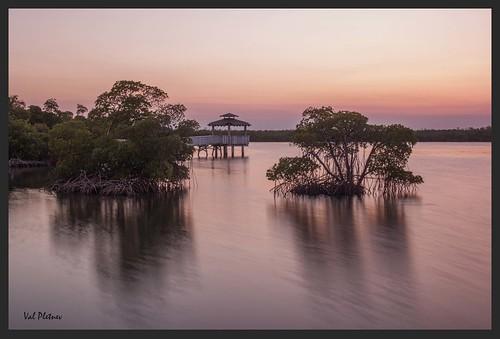 Mangroves at Anne Kolb