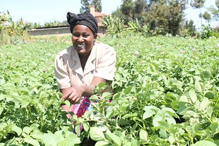 FIPS farmer Doreen Wanja in a potato plot of Asante variety. She bought 20 kg from VPA Catherine Kirema of Karimbene village, Nkuene Ward. | by International Livestock Research Institute