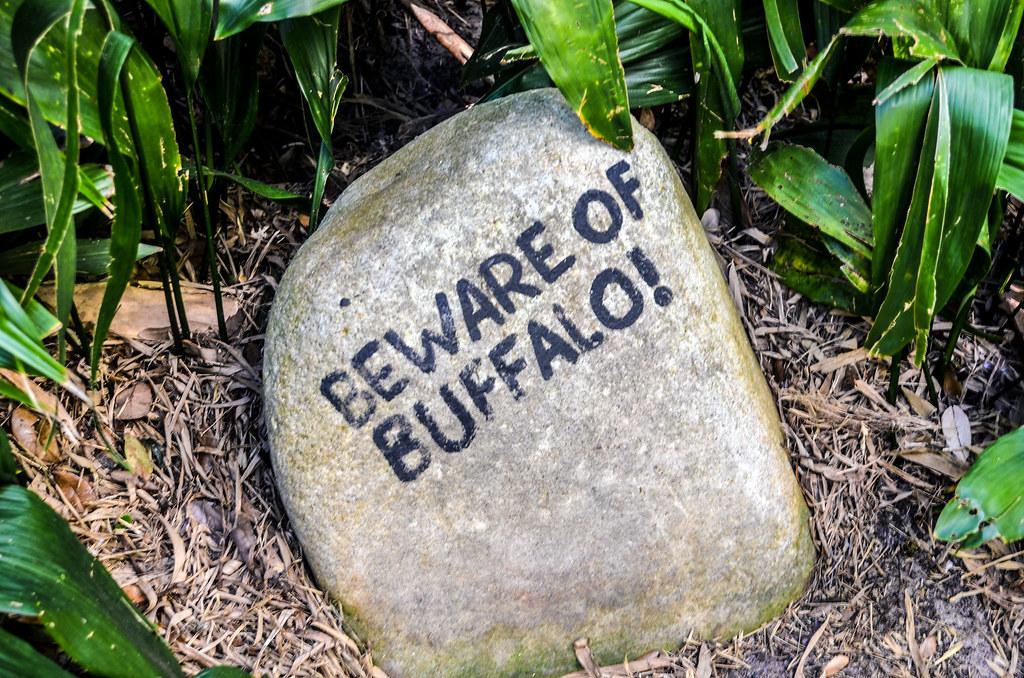 Beware of Buffalo rock