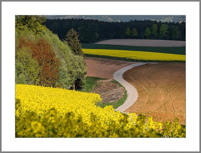 S zwischen den Feldern (S between the fields)