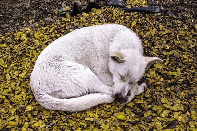 DOG, ORDU TURKEY