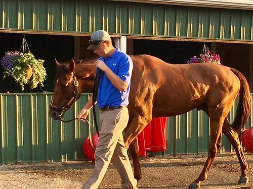 baltimore maryland pimlicoracetrack sunrisetour horses thoroughbreds barns magichour