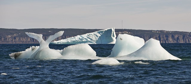Icebergs in Conception Bay with Bell Island in the background.