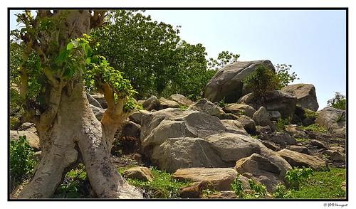 harrypwt abuja nigeria samsungs7 s7 nature green leaves jabi grass framed painting rock