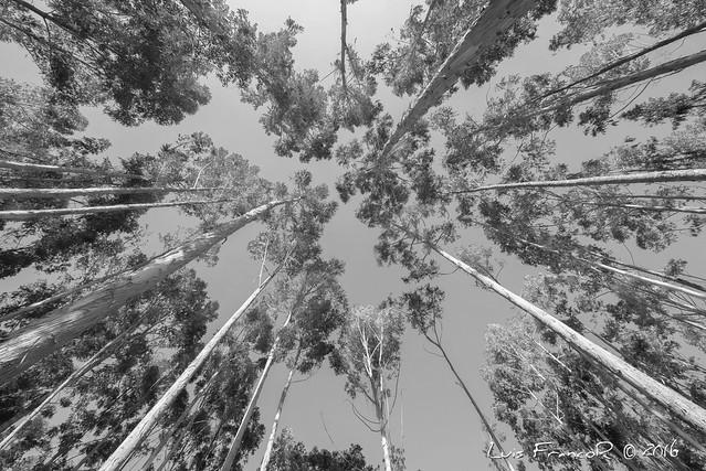 Bosque Salinas B&N