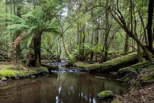 Russle Falls creek