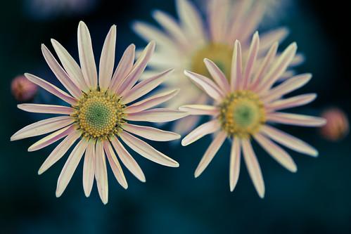 missouri missouribotanicalgarden shawsgarden stlouis usa unitedstates unitedstatesofamerica botanicalgarden flower fav10 fav25