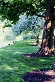 Trees by University of Surrey's Lake