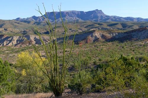 arizona cactus desert landscape mountain ocotillo