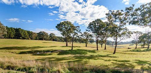 grass autumn landscape nature australia pasture nonurban rural centralwest newsouthwales clouds agriculture countryside scene country scenery paddocks travel gumtree scenic fields outdoors green nsw grassland trees field