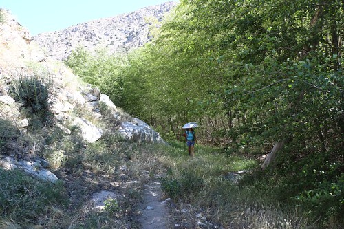 0873 Hiking in the shade of cottonwoods growing along the creek at PCT mile 231   by _JFR_
