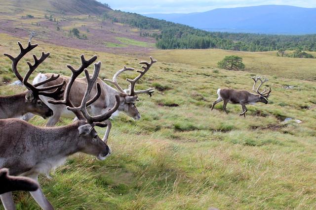 Reindeer Mountain